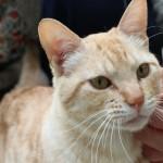 驚愕!和歌山城動物園のクオリティと猫