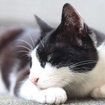 箱根の猫旅。芦ノ湖の営業ニャンに会いにいく