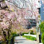 葉桜をこそ、美しいと思う心を持っていたい。