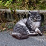 猫島の本家と言えば!東北は宮城県「田代島」に行ってきた!