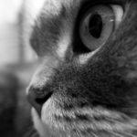 【写真日記66】地下猫組織