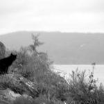【写真日記96】黒猫が夢の中