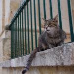 マルタ共和国で猫探し〜海外猫島実録レポート!〜