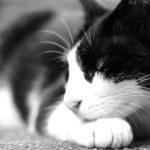 【写真日記123】猫とサピエンスのポジション
