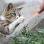 猫島旅行は瀬戸内の「真鍋島」が四国にも負けない猫っぷり!