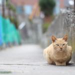 猫島の「真鍋島」は猫だけじゃない!瀬戸内魚介を堪能する!