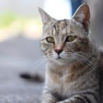坂と猫と路地の街「尾道」で、野良ねこ撮影満喫旅行!