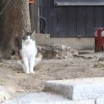 神社猫の何とも言えない複雑な顔と奇妙なポーズ。