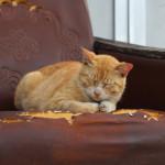 四国の猫島。男木島のねこもふ感がたまらない
