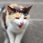 四国の猫島から世界を狙う!男木島代表の野良猫ボクサー!