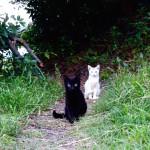 鹿児島で出会った猫は興味津々なオッドアイでした