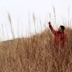 壮大なススキの絨毯が広がる箱根仙石原の秋の色。