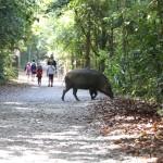ジビエ料理調理体験&狩猟ワークショップで野生動物との共生を考える