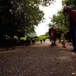 【スペイン巡礼27日目】残り100km!ゴールしたくない症候群に。