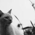 【写真日記119】猫さんの譲渡について思うこと