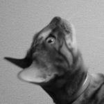 猫ビタミン欠乏症