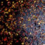岡上淑子の沈黙の奇蹟@庭園美術館でコラージュの可能性を考えた