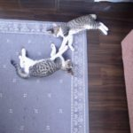 猫生活スタートしてます。